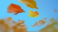 bullring_autumn_02.jpg