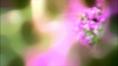 BULLRING_Spring_07.jpg