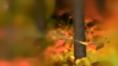 bullring_autumn_04.jpg