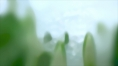 BULLRING_Spring_01.jpg