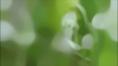 BULLRING_Spring_02.jpg